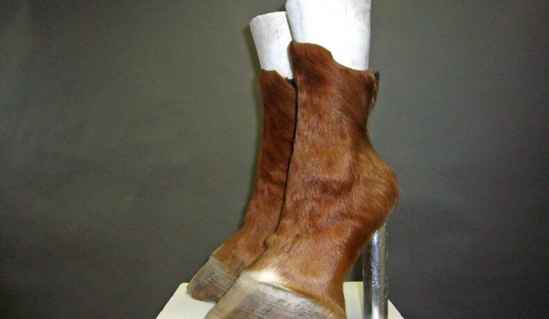 O pereche de pantofi create din resturi animale intră pe lista cu cei mai bizari pantofi din lume