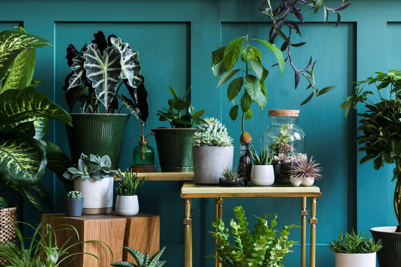Ghivece de flori care purifică aerul dintr-o locuință cu pereți verzi.