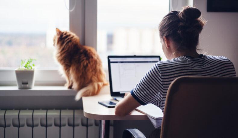 O femeie se uită pe laptop de a biroul din casa ei. Pe caloriferul din fața ei stă o pisică portocalie care se uită pe geam