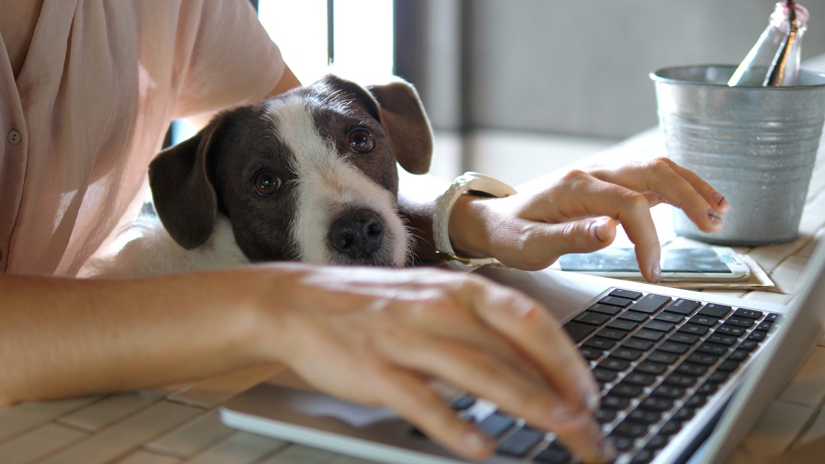 o femeie care stă la birou și scrie la laptop în timp ce cățelușul ei stă pe tastatură și demonstrează din că există multe motive pentru care oamenii își doresc să revină la birou