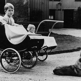 Prințul Charles și Prințesa Anne, în copilărie, în căruț, alături de unul dintre câinii Reginei Elisabeta