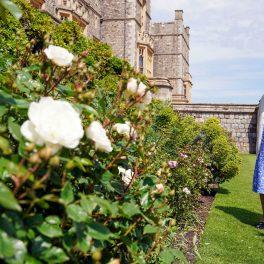 Regina Elisabeta în rochie albastră cu buline albe în timp ce se plimbă pe lângă tufele de trandafiri din grădina Castelului Windsor