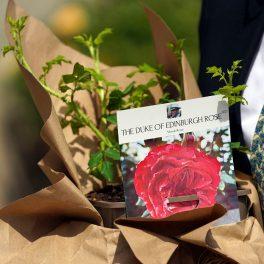 un trandafir roz care poartă numele Ducelui de Edinburgh