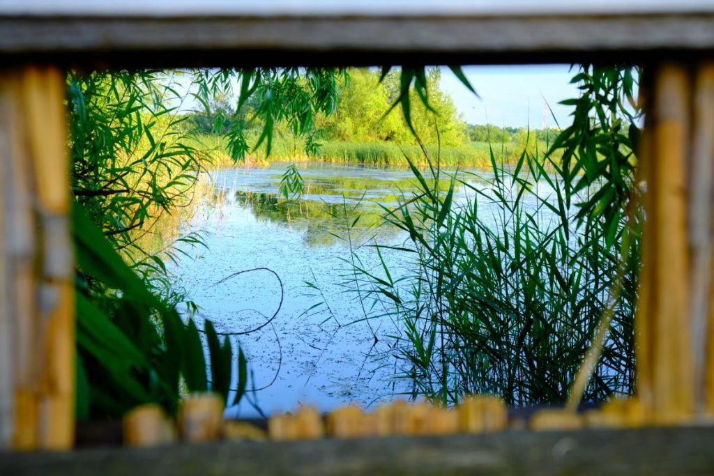 Cadrul perfect pentru observarea păsărilor în mediul lor natural din Parcul Văcărești